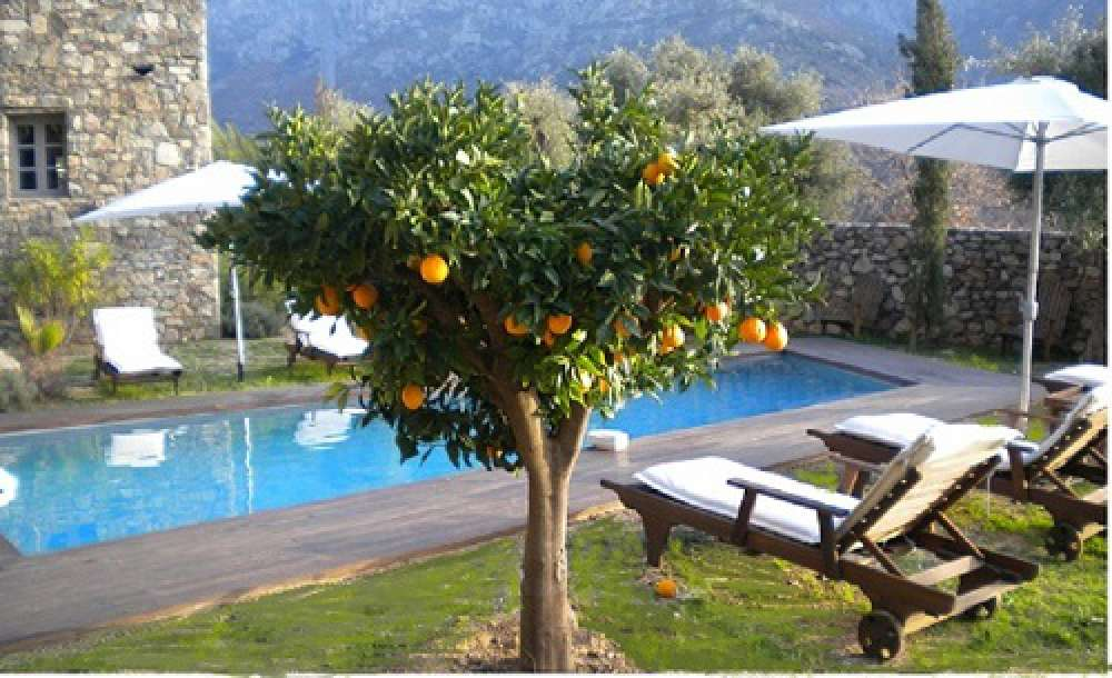 Heated Pool - Orange tree